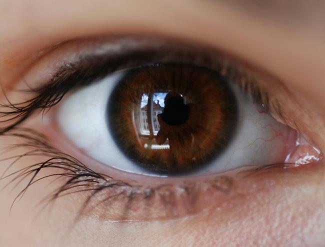 kahverengi göz