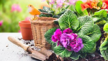 Saksı Çiçekleri Yetiştirme