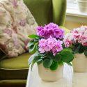salon çiçeği
